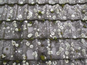 porosty i mchy na dachówkach
